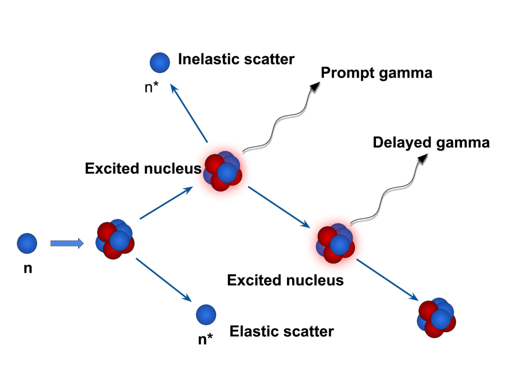 Neutron interaction with matter. A neutron can excite an atom, which will yield prompt and delayed gamma radiation.